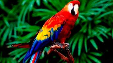 Категория Птицы, попугаи