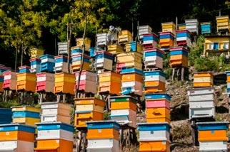 Категория Пчеловодство