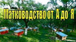 Канал Белорусское Пчеловодство