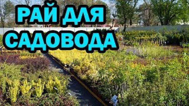 Канал ДОМ СТУК