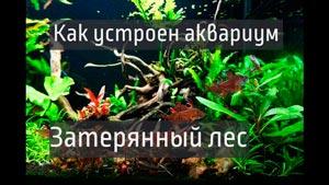 Канал Жизнь аквариума