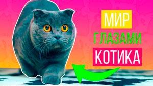 Канал Кот Баттерс