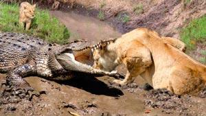 Канал Life of Crocodile