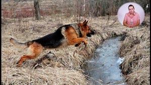 Канал My Dog Ru - Дрессировка и воспитание собаки