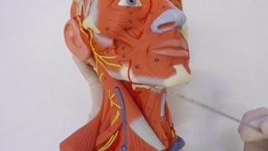 Канал Нормальная Анатомия