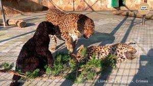 Канал Парк львов Тайган и Мы
