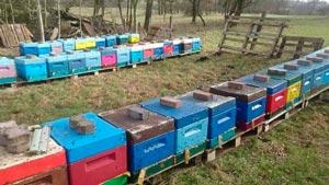 Канал Пчеловодство Германии Imker DE
