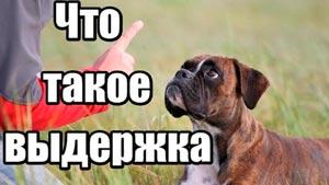 Канал Понять собаку