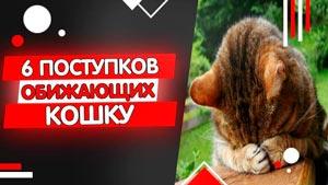 Канал Ветеринар Вячеслав