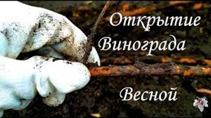 Канал Владимир Маер