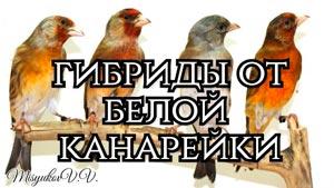 Канал Владимир Мисюков