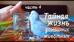 Канал Vолнистик-TV