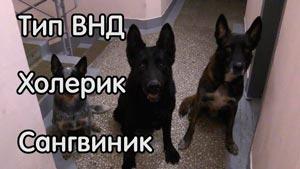 Канал WalkService - всё о животных, дрессировка собак, кошки...