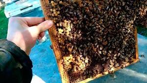 Канал Я Пчеловод
